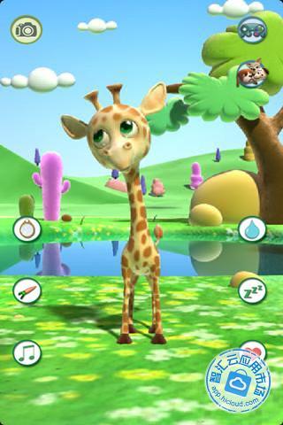我们可以看到长颈鹿顽皮可爱的一面!