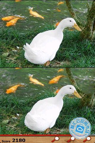 华为手机动物图片