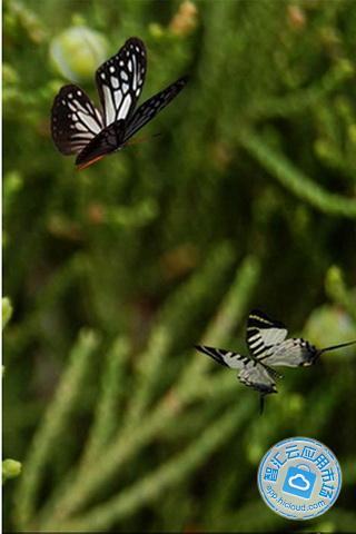 春天大自然风景蝴蝶竖屏壁纸