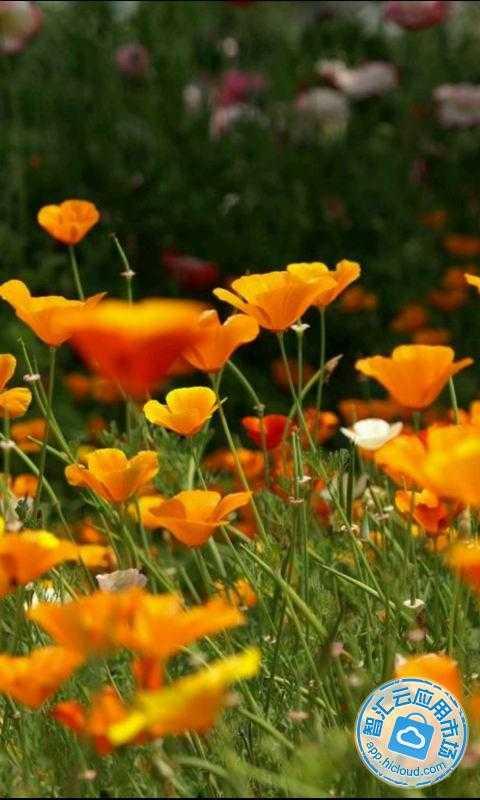 大自然鲜花风景竖屏图片