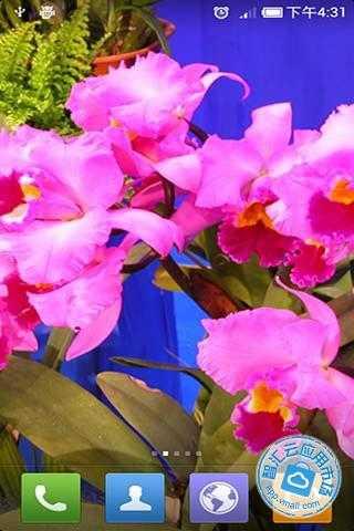 6 分享到:qq空间新浪微博腾讯微博人人网     其他安装方式 美丽花卉