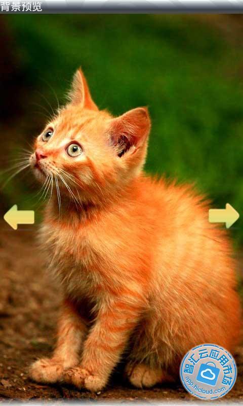 唯美精选动物动态壁纸是一款包括唯美意境 可爱